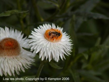 flower-and-bee.jpg